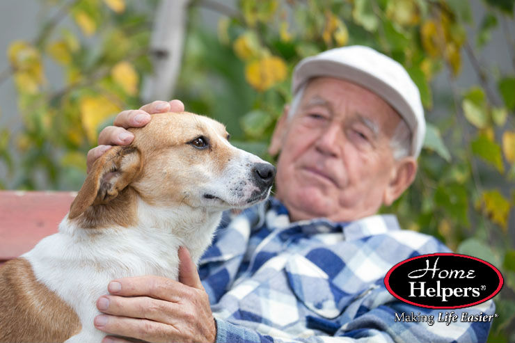 How to Determine When a Pet Has Become Too Much for Seniors
